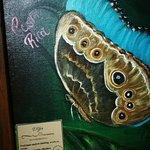 صورة فوتوغرافية لـ Sleep Inn Hotel Paseo Las Damas
