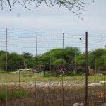 Photo de Onguma Bush Camp
