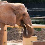 Photo de Seneca Park Zoo