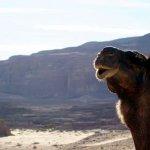Sinai Safari - Day Tours Foto