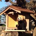 野毛山動物園照片