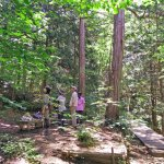 Φωτογραφία: Akasawa Natural Recreational Forest