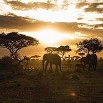 Sunset at Serengeti and elephant was just around