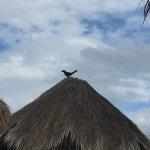 Foto de La Playa Xpuha