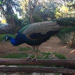 Photo de Parque Zoológico de Lagos