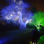 The magical blue tree