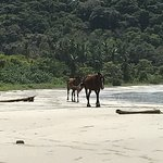 Evenings were very romantic , wild horses on the beach,the moon lighting up the resort and a bea