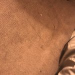 Dirty carpet when I checked in