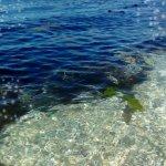 orca-image-1513088562204_large.jpg