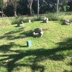 Art installation in the garden
