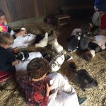Feeding the guinea pigs and bunnies