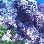Obligatory Clownfish photo at Namena Marine Reserve
