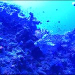 Lionfish Namena Marine Reserve