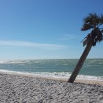 Blind Pass Beach, a solitary palm bent by the wind.