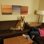 Living room and pet friendly.