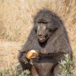 Carnivore Feeding tour
