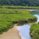 Bilde fra Mangrove Forested Area