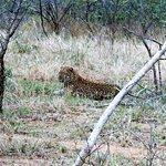 Bilde fra Mopane Bush Lodge