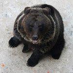 """Посещение зоокомплекса """"Три медведя"""" - обязательная часть многих снегоходных маршрутов"""