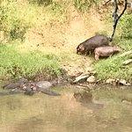 Photo of Mara River Camp