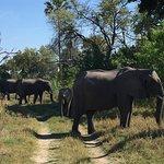 Foto van Kwetsani Camp