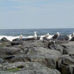 Seagulls on the Jetty