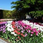 Roozengaarde Gardens
