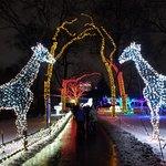 Detroit Zoo Wild Lights.