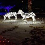 Detroit Zoo Foto