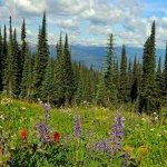 Gorgeous wildflowers.