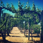 The portal into the Temecula Valley's finest winery!