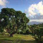 Photo de Le Jardin Malanga