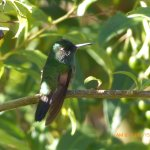 bird on the grounds