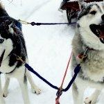 fun pups