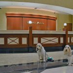 Checking in with my dogs in the hotel lobby