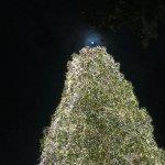 moon as star...