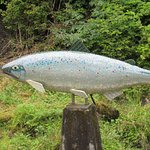 Lovely Salmon sculpture in the creek that -by the way- is often filled with salmon.