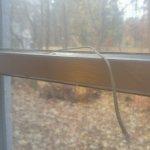Window fell when openned