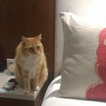 The rooms are serene- even the Kitty felt at home right away!