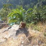 Monkey enjoying sunshine