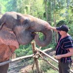 Meeting the elephants on arrival