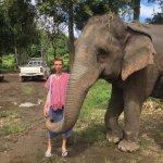 Elephant Welcare nearby Kad Sala