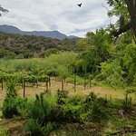 Peter Bayly Wines Picture