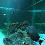 Nong Khai Aquarium Photo