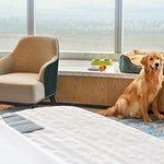 Pet friendly rooms