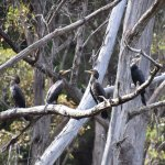 Forest Secrets Photo