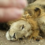 Ijue Africa Safaris Photo