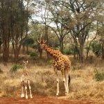 Giraffe Manor Photo