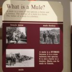 mule sign