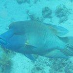 The Savoy har et af de smukkest koralrev i Sharm El-Sheikh